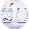 fish.fw